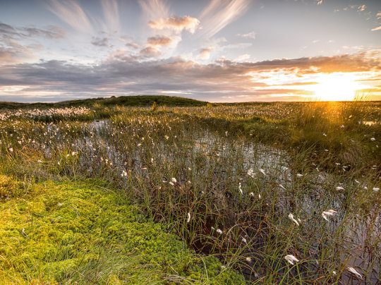 Peatlands Landscape at Sunset